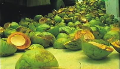 segundo artigo postado no site Cocoverderj, para cada 250ml de agua de coco verde, 1KG de lixo é gerado.E para onde estaria indo esse lixo? Ainda de acordo com o site, que tem como objetivo a valorização do lixo gerado pelo consumo da agua de coco, uma tonelada dia de lixo de coco cria 6 empregos diretos.
